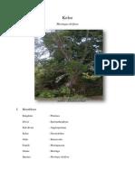 Deskripsi Tanaman Kelor Moringa Oleifera