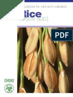 panduan karakterisasi IRRI