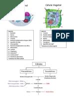 resumoglobalbiologia11_2.pdf