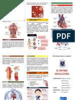 triptico sistema circulatorio.docx