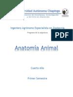 Anatomía Animal