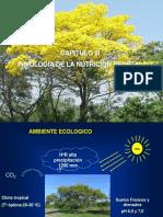 Fisiología de la nutrición Forestal complemento