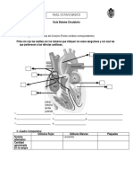 Guia-sistema circulatorio.docx
