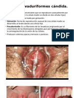 Hongos Levaduriformes Candida (1)