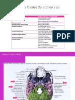Aberturas de la base del cráneo y su.pptx