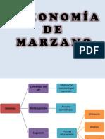 1.6 Taxonomia de Marzano