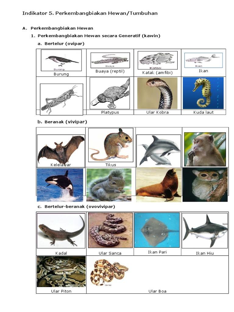 940 Gambar Hewan Yang Berkembangbiak Secara Generatif Gratis