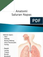 Anatomi Saluran Napas.ppt