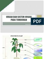 Organ Dan Sistem Organ Pada Tumbuhan Part 5