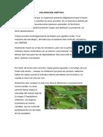 coloracion criptica.docx