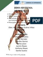 Informe Del Sistema Muscular