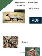 Imágenes de La Fauna Del Norte Chico De