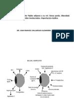 bioquimica adipocito
