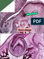 35293597-Oral-Biology-Oral-Histology-Slides-American-Corner-Family-ACFF-AmCoFam.ppt
