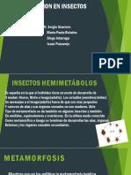 Expo de Ciencias Insectos 8