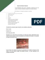 Reporte de Estado de Vehículos.docx