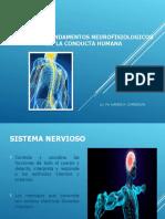 4 NEURONA Sistema Nervioso (1)