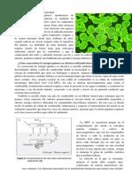 Bacterias Productoras De