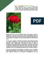 Rosa e orquídea - dois gêneros de beleza.docx