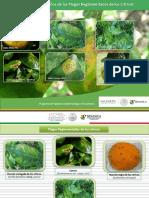 Guía de Síntomas y Daños de Plagas Reglamentadas de Los Cítricos