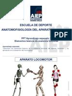 PPT Elementos Básicos de Anatomía Funcional