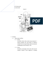 Anatomi dan Fisiologi Anak PNEUMONIA.docx