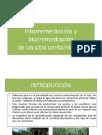 Biorremediación y Fitorremediación