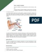 FUNCION DEL OIDO EN EL CUERPO HUMANO.docx