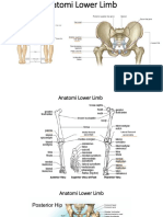 Anatomi Lower Limb.pptx