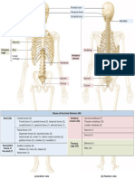 Axial Skeleton Summary