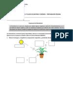 Guía-N°-4-FOTOSINTESIS-Y-CADENAS-ALIMENTARIAS-6°-Básico