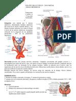 Cara e Cuello.pdf