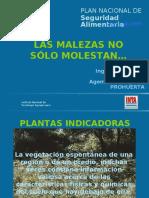 Plantas indicadoras - Cordoba.pdf