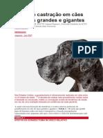 Prós e Contras Da Idade de Castração Em Cães de Raças Grandes e Gigantes
