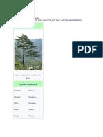 Pine.docx