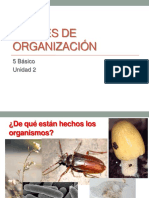 PPT NIVELES DE ORGANIZACION.ppt