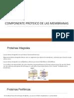 Componente Proteico de Las Membranas