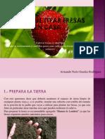 Armando Nerio Guedez Rodríguez - Cómo Cultivar Fresas en Casa, fácil y rápido