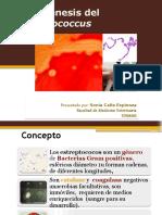 Patogénesis Del Streptococcus
