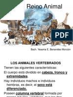ANIMALES VERTEBRADOS  PARA 1RO.ppt