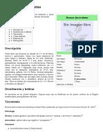 Bromus fasciculatus