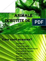 (24) ANIMALE OCROTITE