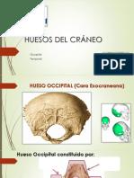 Huesos Del Cráneo Occipital y Temporal