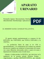 Catorceava-2.-APARATO-URINARIO.ppt