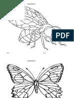 Insecte-2