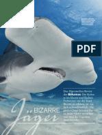 tauchen-spezial-2017-hammerhaie-mk
