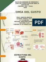 Anatomia Del Gusto.presentacion