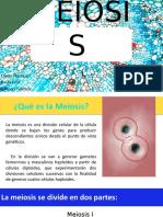 Dra. Perez Meiosis