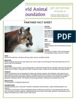 panther.pdf