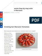 Growing Tomatoes Step by Step With Pictures - San Marzano - Urban Gardening, Terrace Gardening and H